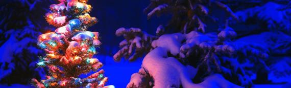 Bishop's Blog: Welcoming Christmas